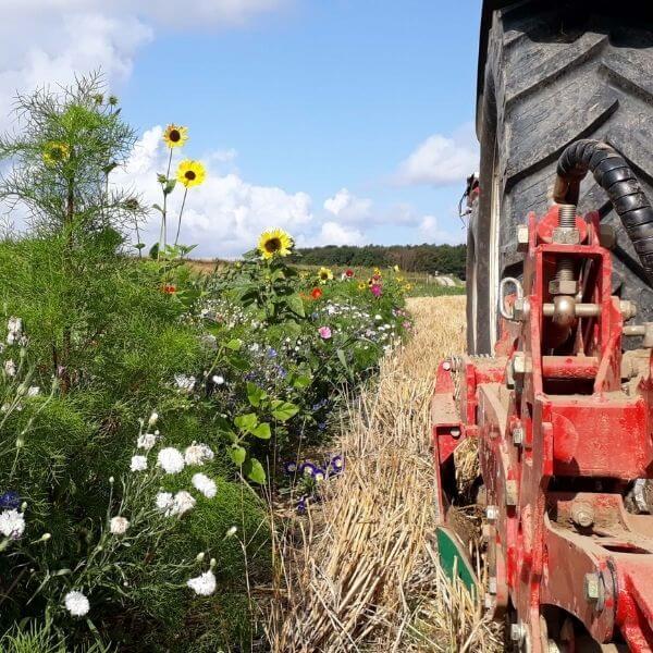 duurzaamheid brielse boer